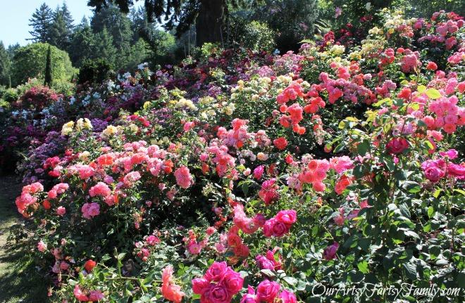 7-2-2017 Rose Garden Artsy IMG_5896