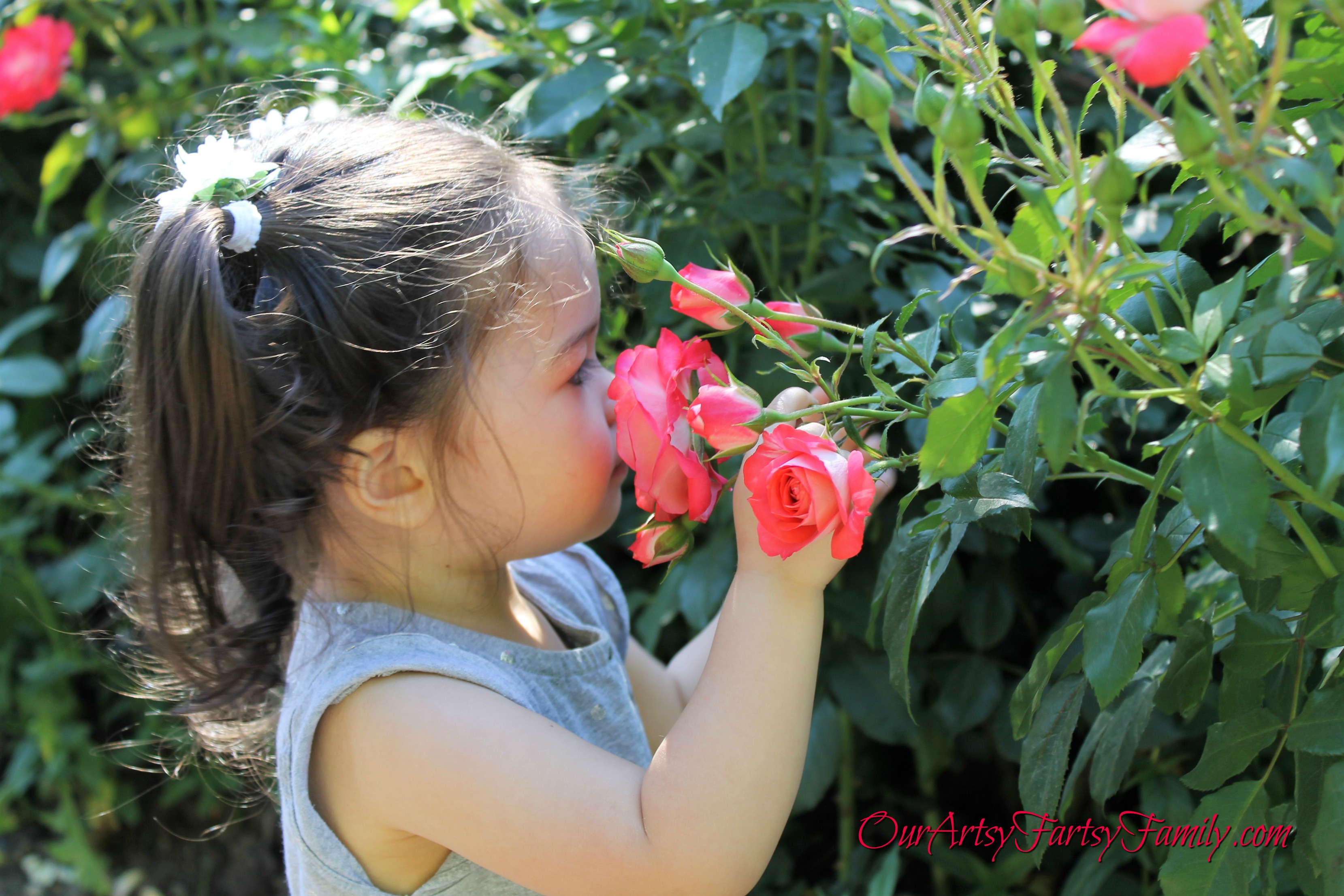 7-2-2017 Rose Garden Artsy IMG_5932