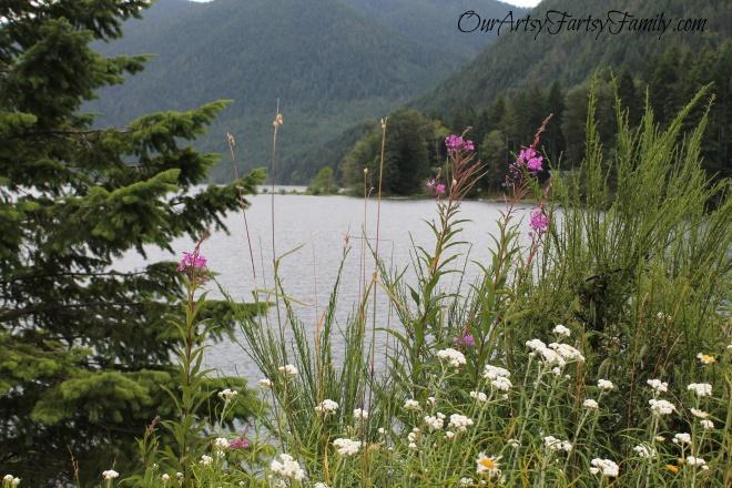 7-11-2020 Lake Cushman Artsy IMG_1080