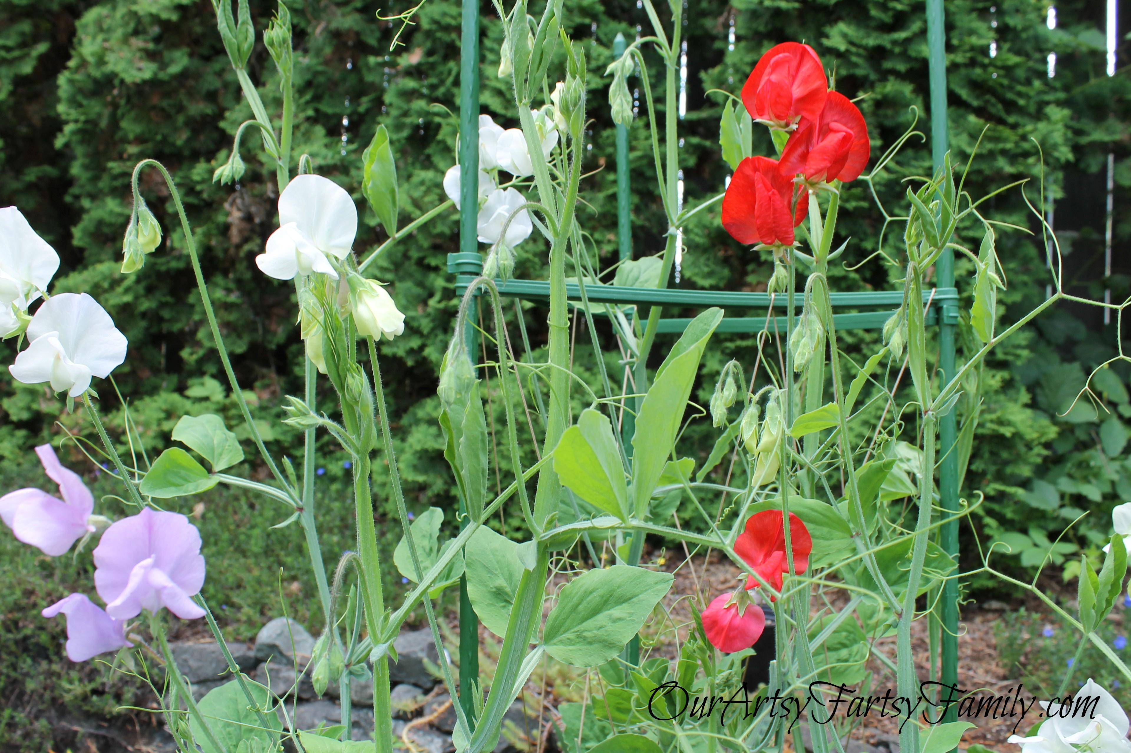 7-2-2020 Garden Artsy IMG_0565 (2)