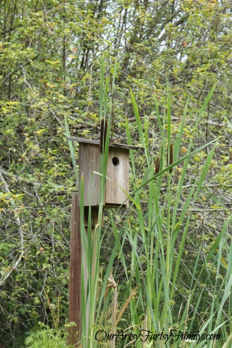 Lots of bird and bat houses.